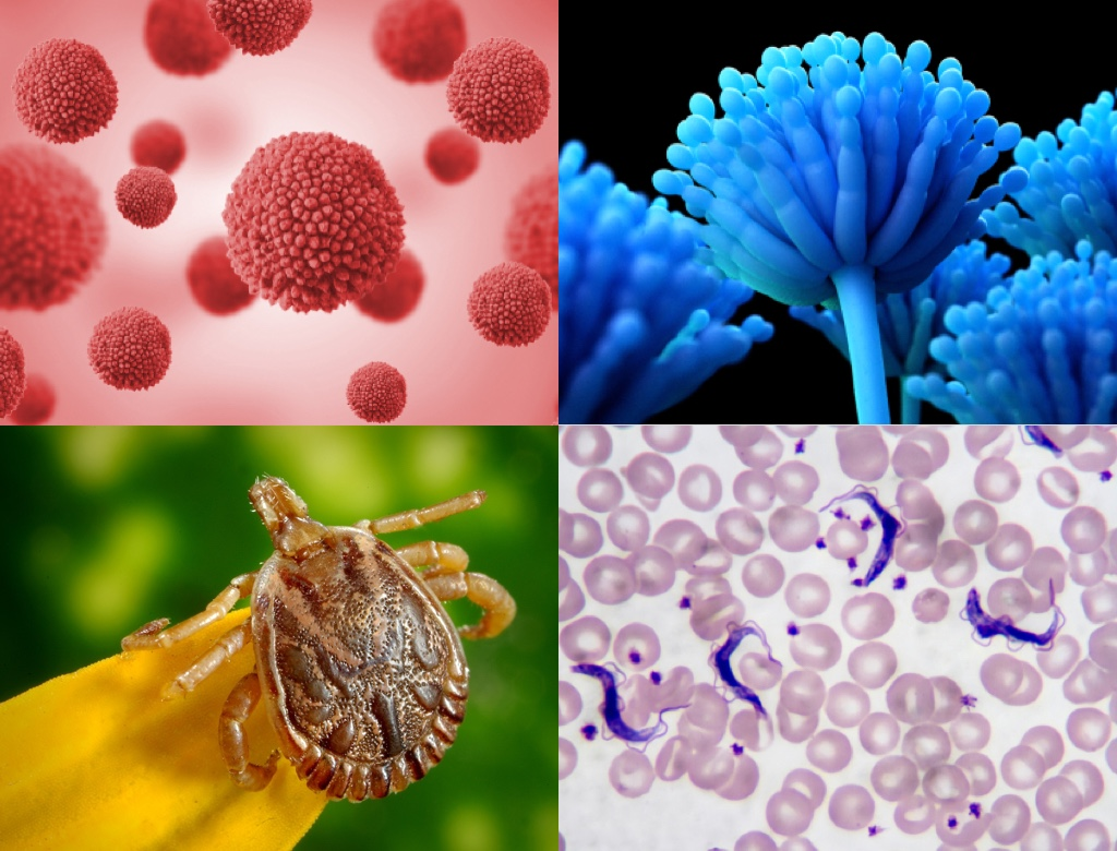Test your infection knowledge with multiple choice questions